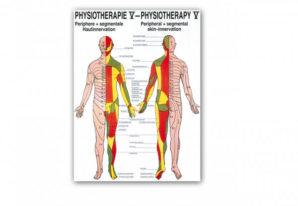 Poster Physiotherapie V: Periphere & segmentale Hautinnervation, 70 x 50 cm